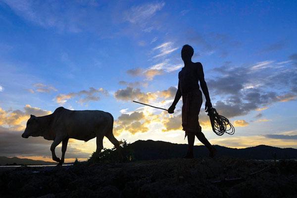digitising-farm-market