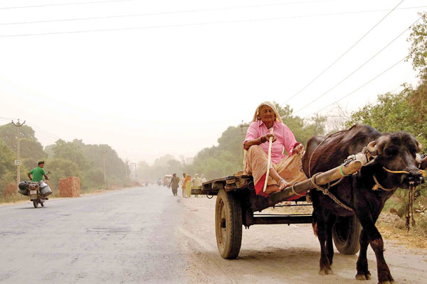 haryana-area-lady-in-road
