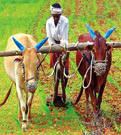 Doubling-farm-income