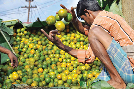 orange-in-market-selling-by-man
